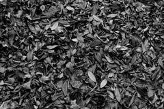 Blancs noirs sèchent le papier peint de nature de porte de ciel de feuilles Photos stock