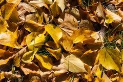 8 bland annat leaves för höstbakgrundseps mapp Arkivfoto