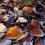 8 bland annat leaves för höstbakgrundseps mapp Royaltyfri Foto