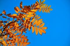 8 bland annat leaves för höstbakgrundseps mapp Royaltyfria Bilder