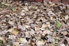 8 bland annat leaves för höstbakgrundseps mapp Fotografering för Bildbyråer