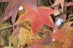 8 bland annat leaves för höstbakgrundseps mapp Royaltyfri Bild