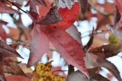 8 bland annat leaves för höstbakgrundseps mapp Arkivbild