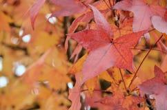8 bland annat leaves för höstbakgrundseps mapp Royaltyfri Fotografi
