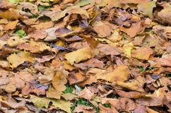 8 bland annat leaves för höstbakgrundseps mapp Arkivfoton