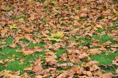 8 bland annat leaves för höstbakgrundseps mapp Arkivbilder