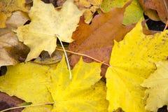 8 bland annat leaves för höstbakgrundseps mapp Höstfbstractbakgrund Arkivbilder