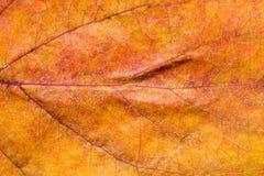 8 bland annat leaves för höstbakgrundseps mapp Makro Royaltyfri Bild