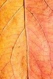 8 bland annat leaves för höstbakgrundseps mapp Makro Arkivfoto