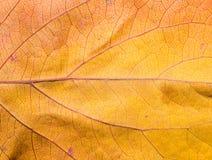 8 bland annat leaves för höstbakgrundseps mapp Makro Royaltyfria Bilder