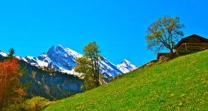 Bland de schweiziska fjällängarna Royaltyfria Foton