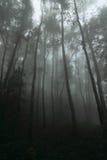 Bland den dimmiga och rikliga skogen i Thailand Royaltyfri Foto