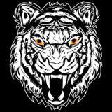 Bland mellan en tiger och ett lejon ut ur en liger Arkivfoto