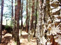 Bland träd i en ung skog royaltyfri foto