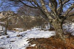 Bland trän på västra sida av det Grigna maximumet Royaltyfri Fotografi