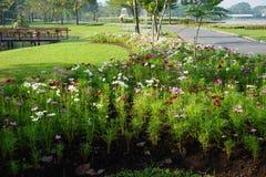 Blandad färg av tusenskönablommor arkivfoto