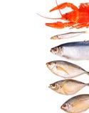 Blandad fisk på vit bakgrund med stället för text Royaltyfri Bild