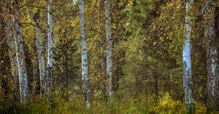 blandad höstskog Fotografering för Bildbyråer