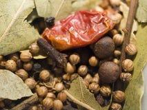 blandad krydda Fotografering för Bildbyråer