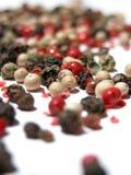 blandad peppar Royaltyfria Foton