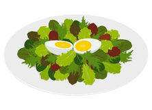 Blandad sallad lämnar med det hårda kokt ägget Arkivbild