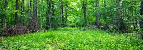 Blandad skog Royaltyfria Bilder