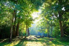 Blandad skog Arkivbild