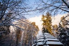 Blandad skog för vinter i snö Arkivfoto