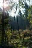 Blandad skog i solskenet Arkivfoton