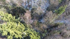 Blandad skog med prydliga träd och björkar, flyg- vintersikt lager videofilmer