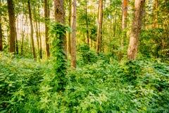Blandad skog, rysk natur Arkivfoton