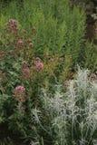 Blandad vegetation Arkivfoton