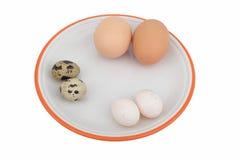 blandade ägg Fotografering för Bildbyråer