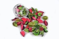 Blandade blommakronblad i säsongsbetonat Royaltyfria Bilder
