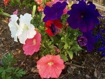 blandade blommor Royaltyfri Foto
