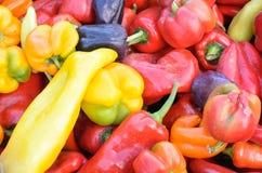 Blandade färger av söta spanska peppar Royaltyfri Foto