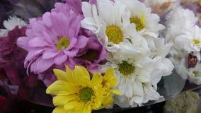 Blandade färgrika blommor Arkivfoto