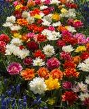 Blandade färgvårblommor arkivfoto