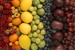 Blandade frukter för regnbåge fotografering för bildbyråer