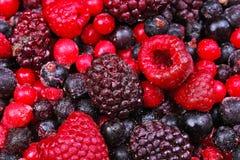 Blandade fryste frukter för blandad bärtranbärbjörnbär som bakgrund Arkivbild
