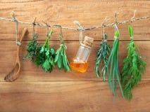 Blandade hängande örter, persilja, vis man, rosmarin, vårlök och Royaltyfria Bilder