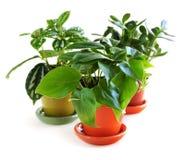 blandade houseplants Arkivfoton
