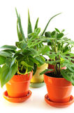 blandade houseplants Royaltyfri Foto