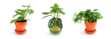 blandade houseplants Arkivbilder