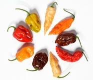 Blandade nya organiska peppar för röd chili, habanero Arkivfoton