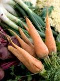 Blandade organiska grönsaker Arkivfoto