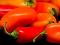 blandade peppar arkivbild