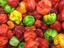 blandade peppar Fotografering för Bildbyråer