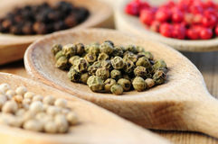 blandade peppercorns Royaltyfri Fotografi