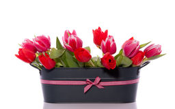 blandade rosa röda tulpan Royaltyfri Fotografi
